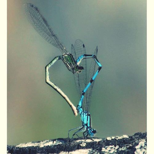 Dragonfly is