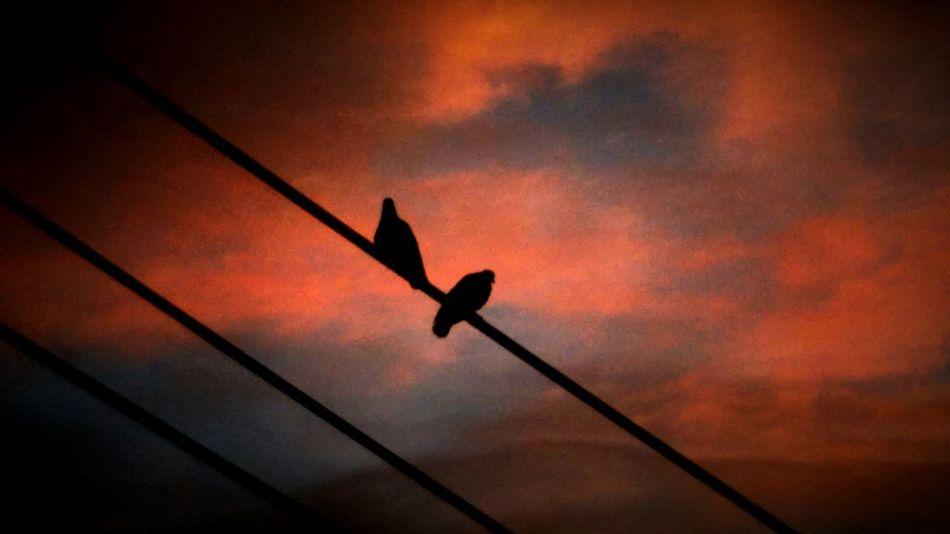 Pigeons, 2 pigeons in firing sky. Open Edit. Eyeem Gallery Taking Photos.