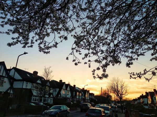🇬🇧 Beauty In Nature Nature_collection Trees And Nature Nature Photography Evening Sky Flower Collection Flowering Tree Mobilephotography Sunset_collection Evening Beauty Cherry Blossoms City Sunset Tree Sky Architecture Built Structure
