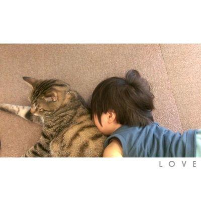 お返事前にすみません。 金太郎のことを愛してやまない息子。✲ * そして無抵抗な金太郎。 * 可愛い……♥ 可愛すぎる……♥♥ * 兄弟 1歳10ヶ月 子供 Ig_kids ig_boysig_brother猫ネコねこぬこにゃんこig_catsjust_cute_catsminu_the_cat3animals_cutsig_oyabakabu親バカ親ばか部love
