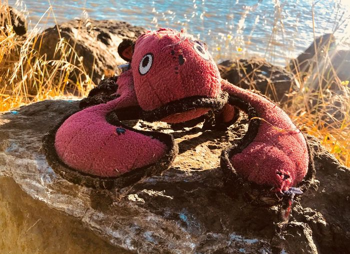 Rock Lobster IPhoneography Lobsters Nature Water Land Close-up Representation Sunlight Beach Red Toy No People Creativity Outdoors