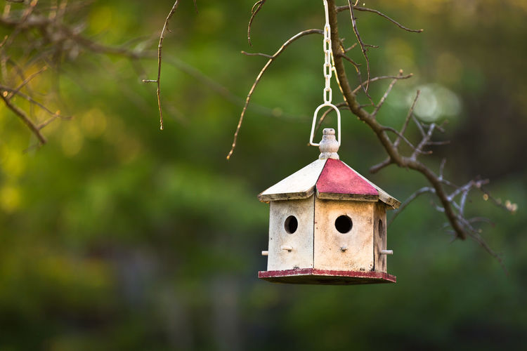 Close-up of birdhouse hanging from tree branch