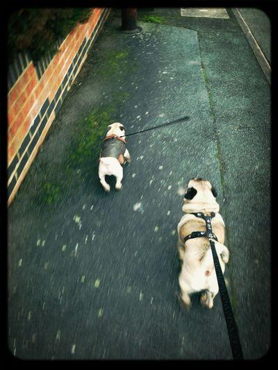 Wilbur And Douglas