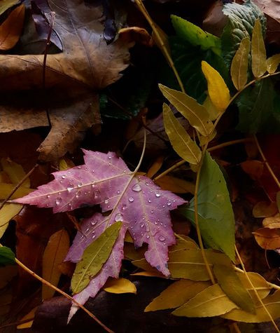 Close-up Leaf Nature Leaves 🍁 Leaves🌿 Autumn Leaves Outdoors Autumm Colours Autumn Colours Beauty In Nature Leaf 🍂