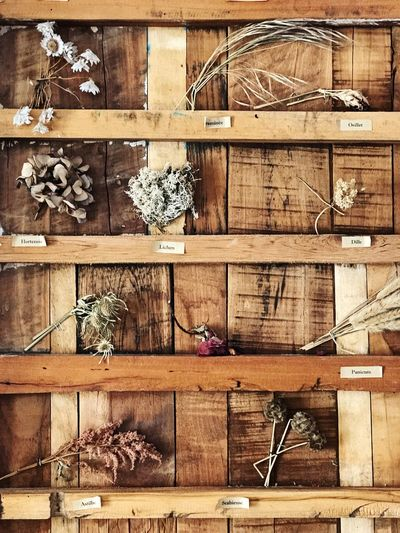 Dried plants, herbs and botanicals Dried Flowers Homeopathy Medicine Healthy Skincare Earth Organic Holistic Health Beauty Natural Botanical Flowers Herbs No People Day Variation Nature Abundance The Still Life Photographer - 2018 EyeEm Awards