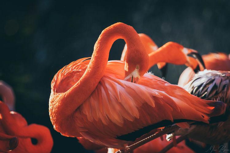 Close-up of orange birds
