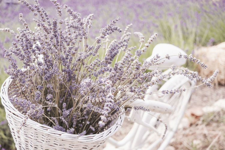 Close-up of flowering plant in basket on field