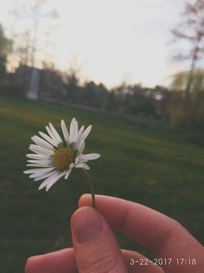 You don't need pro camera, just day light and good perspective Human Hand Flower One Person Nature Outdoors Beauty In Nature Day Close-up Nature