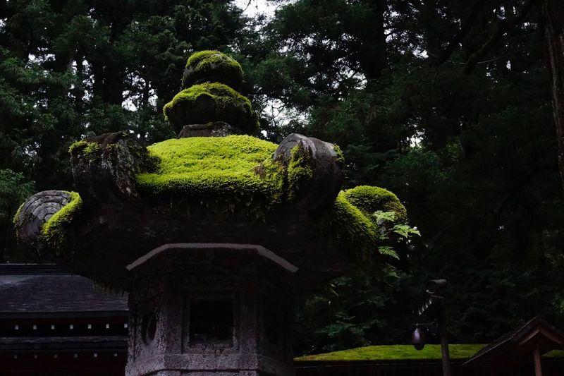 苔むす灯籠 Moss