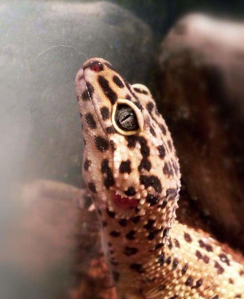 Lizard Close-up Eyeem Photography