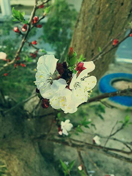 Gabes Flower Flowers