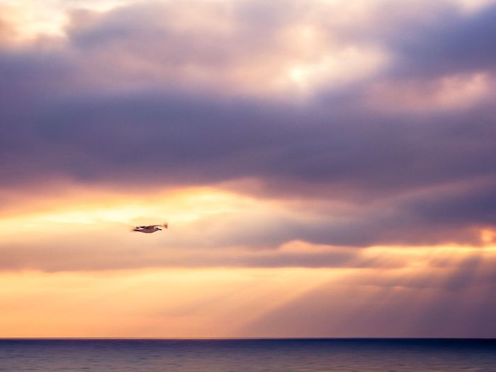 Seagull flying over the ocean Oceanside Sunset_collection Nature_collection Bird Flying Bird Sky Cloud - Sky Flying Sea Water Mid-air Nature Sunset Horizon Over Water Beauty In Nature Scenics - Nature Travel No People Dusk Horizon Outdoors