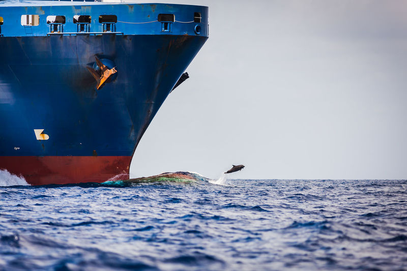 Dolphin jumping the bulbous wave of a german freighter off the coast of Islamorada, Florida in the Atlantic Atlantic Container Ship Day Dolphins Freighter Jumping Marine Nature Nature Nautical Vessel Outdoors Sea Sea Life Ship Transportation Water Waterfront Wave