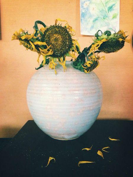 Sunflower Sunflowers Vincent Van Gogh Van Gogh