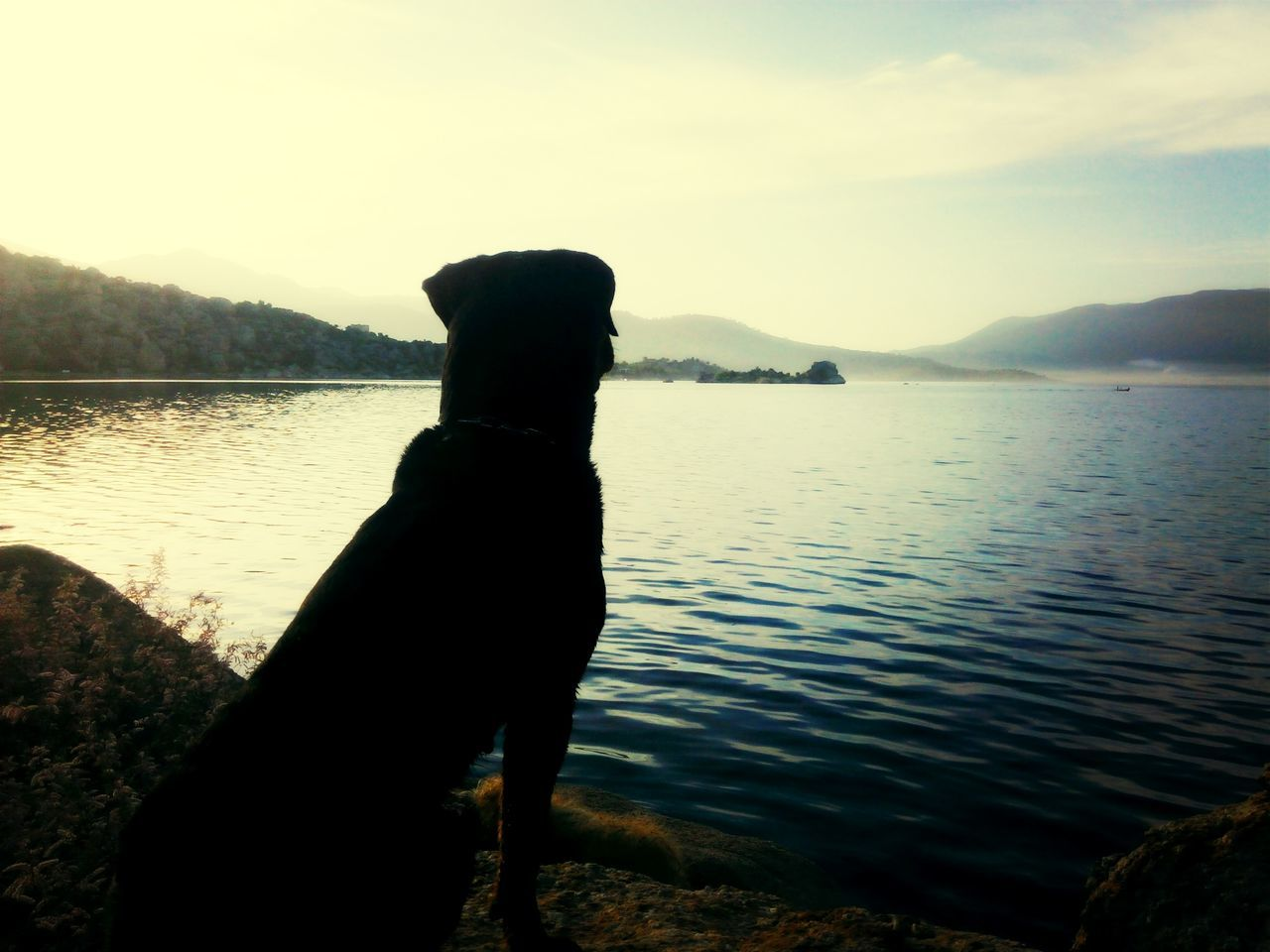 water, lake, nature, mountain, outdoors, beauty in nature, scenics, lakeshore, sky, one person, tranquility, dog, tranquil scene, silhouette, pets, sunset, day, real people, domestic animals, tree, animal themes, mammal, people
