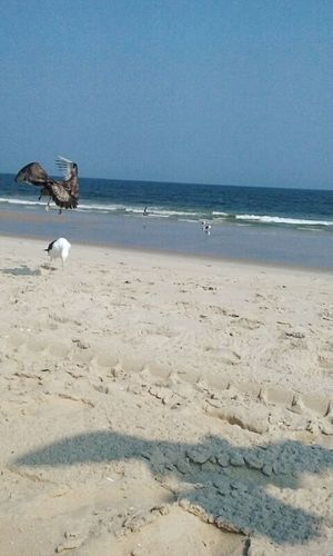 Peacrful day at the beach, love the shadow of the bird flying above