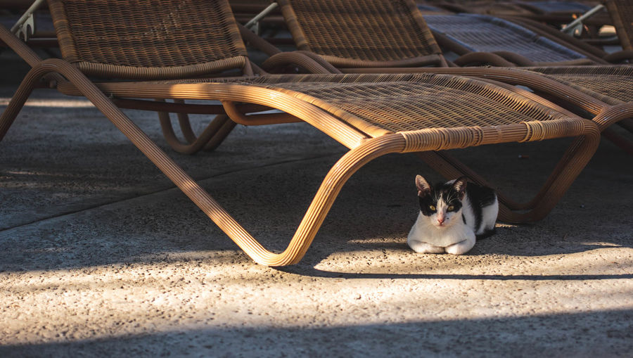 Kitten under a chair while the sun hits back. Adorable Adult Adults Only Animal Themes Cat Chair Cute Day Dog Domestic Animals Feline Horizontal Light Mammal One Animal Only Women Outdoors People Pets Portrait Shadow Sunset Vacation