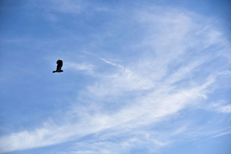 Terrils Animal Beringen Bird Clouds Day Lapwing Sky