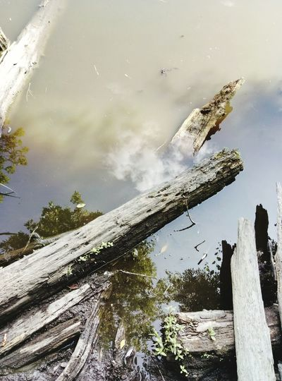 Water No People Lake Outdoors Animal Wildlife Day Reptile Animal Themes Nature Sky Reflection Visualmagic