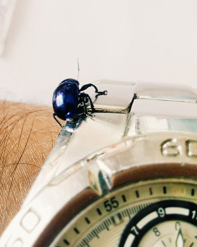 Selective Focus Beetle Bugs Life Watch Time Macro Purple Violet Titan Analog Watch