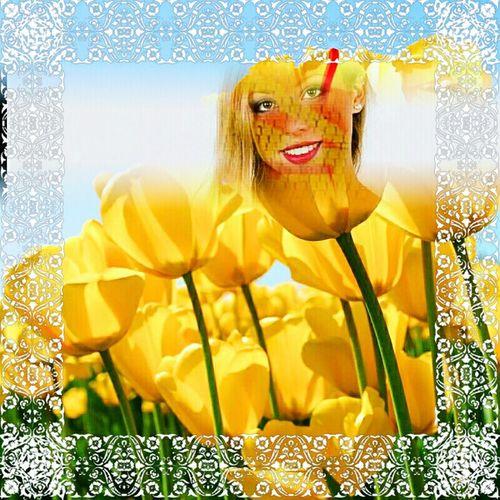 Primavera Tulipani Gialli Gelosia Profumo Di Donna Che Sboccia Lithuania russia
