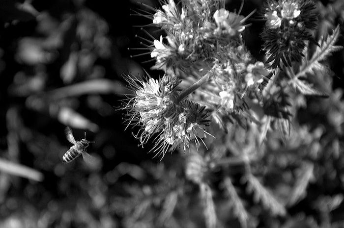 Bee, insekt, Flower Tree Close-up Animal Themes
