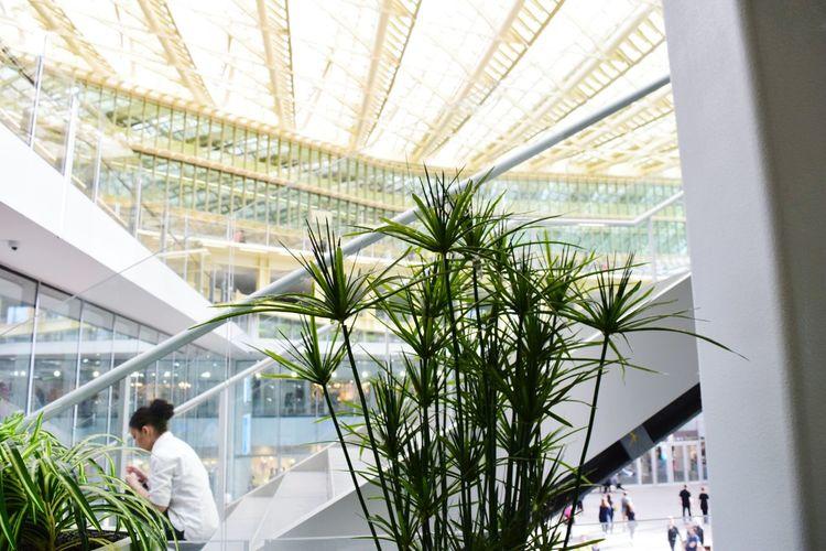 The Architect - 2016 EyeEm Awards Canopée Les HallesTaking Photos Paris ❤ Paris, France  Green Leaves Greenplants