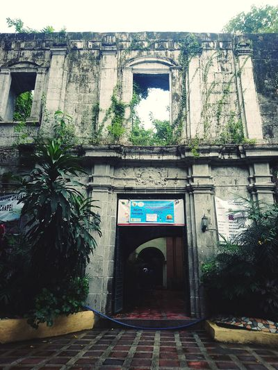 Old wall Architecture Built Structure Arch Gate Entrance History No People Day Building Exterior Outdoors Old EyeEmNewHere Tree The Way Forward Plant Entry