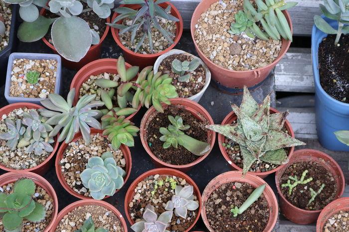 Close-up Day No People Plants Succulents SucculentsLover 多肉の花 多肉植物