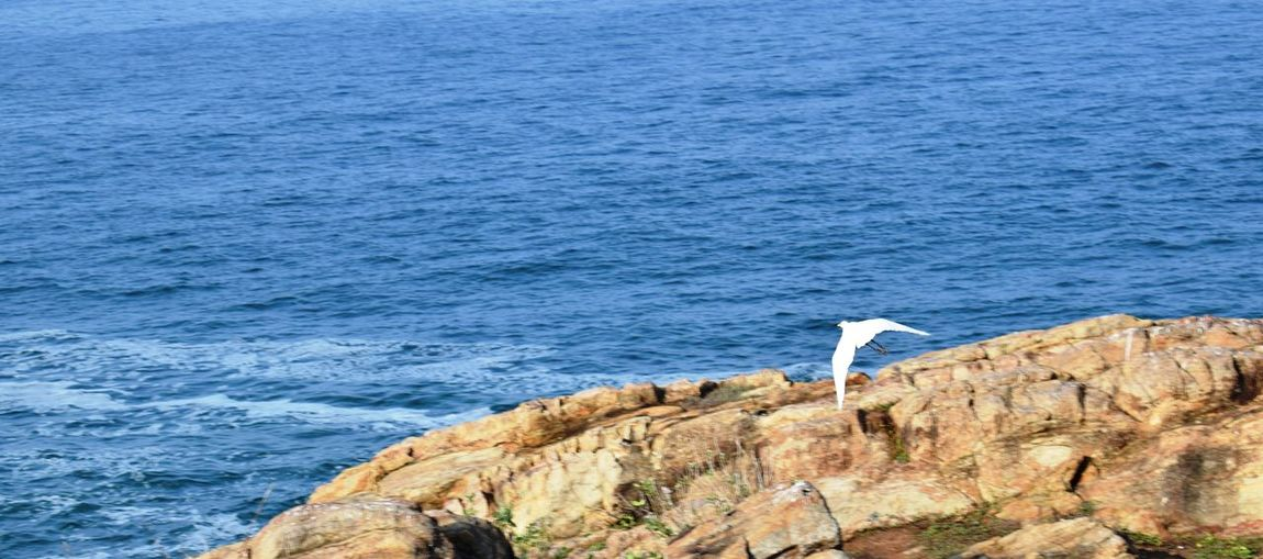 Flight Bird Sea Ocean Rock Beach Beachphotography Kovalam Beach Animal Themes Outdoors Day Beauty In Nature No People