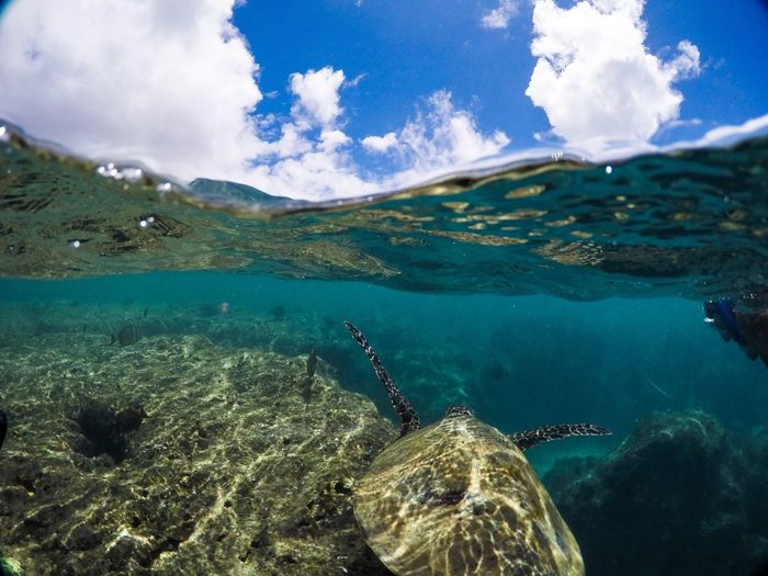 Water surface shot of turtle swimming in sea against sky