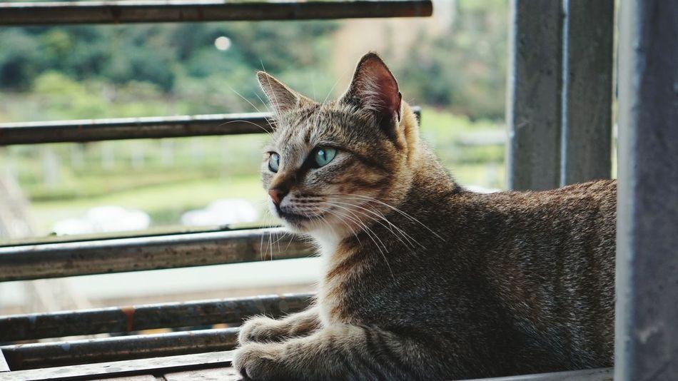 Locked in thought Houtong Houtong Cat Village Cat Cats Taipei Taiwantrip2017 Taipeitrip Taiwan Cats Of EyeEm