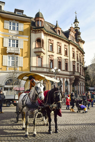 Alto Adige Animal Animal Themes Architecture Black And White Horse Bolzano Bolzano - Bozen Building Exterior Cart City Day 4 Horse Italy January 4 One Year Project Outdoor 4/365 People South Tyrol Tourism Town Square Transportation Travel Travel Destinations Trentino Alto Adige