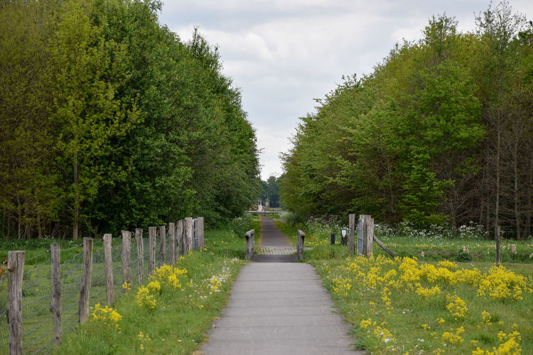 Footpath amidst flowering plants and trees against sky