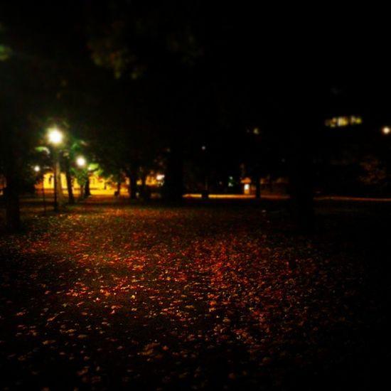Autumn Kupittaa Puisto Syksy iltalenkki