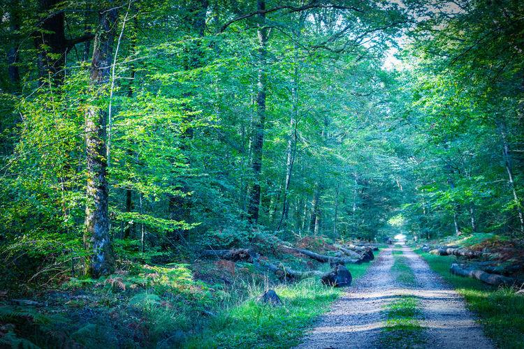 Path leading