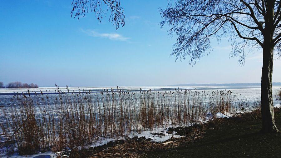 Ice Winter