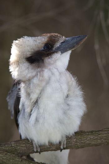 Close-up of young bird perching outdoors