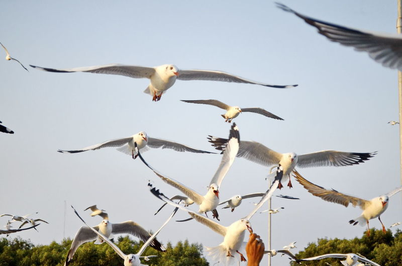 Ecotourism, see seagulls, bangpoo, Samud Prakan Bird Flying Animals In The Wild Animal Wildlife Vertebrate Nature Animal Themes Group Of Animals Water White Color Focus On Foreground Day No People Perching Bird Perching Lake Seagull Seagulls Seagulls In Flight Beuty Of Nature Zoology Outdoors Great Egret Backwaters Water Bird
