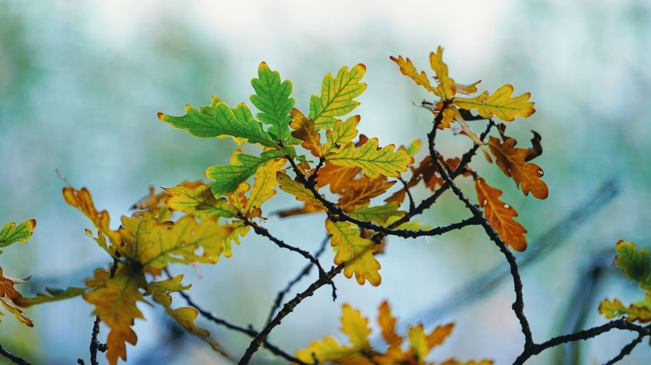 Leaves🌿 Autumn Autumn colors Autumn Leaves Leaf Branch Beauty In Nature Nature Selective Focus Leaves Yellow Outdoors