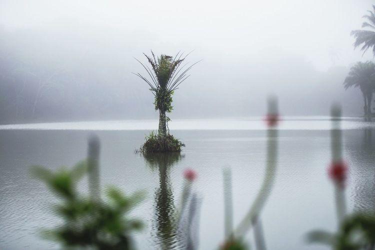 Calm Serenity Lake Man Made Lake Forest Fog Morning Tanzania Beautiful Nature Travel Photography