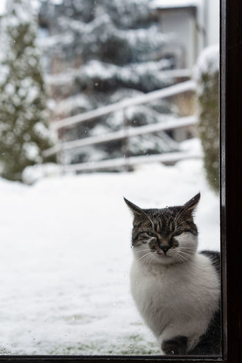 My revenge will be epic. Looking At Camera Cat Animal Themes Snowflake Pets Snow Cold Temperature Winter Snowing Domestic Cat Feline Portrait Window Kitten Whisker Domestic Animals