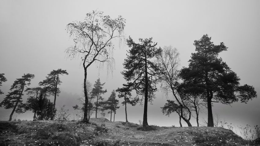Blackandwhite Tree Plant Growth Nature Sky Beauty In Nature No People Landscape