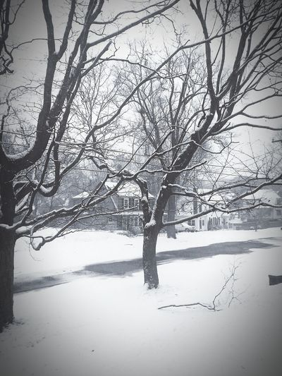 Protectyourpeace Love My Life  Life Is Always Beautiful Its A Beautiful Life Winter 2017 Connecticut 7am  Peace Winter Snow First Snow Fall Of 2017 Broken Tree Branch Snowy Road L Meriden Ct Connecticut Ct Winter 2017 School 2 Hour Delay Snowwhite Reflection Beauty In Nature No People Outdoors Rural Scene Scenics Tranquility first eyeem photo