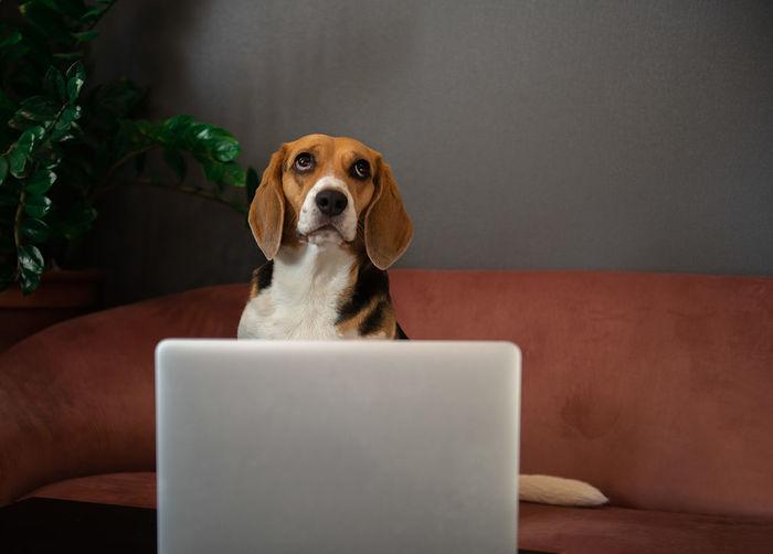 Portrait of dog sitting on sofa