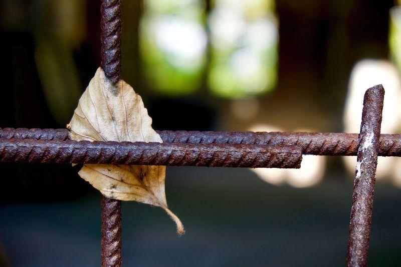 Close-up of leaf on metallic rods