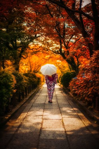 Kyoto。 colour of life Kyoto Japan Full Length Tree Rear View Real People Plant Umbrella One Person Nature Walking Adult Outdoors Day Women Park The Way Forward