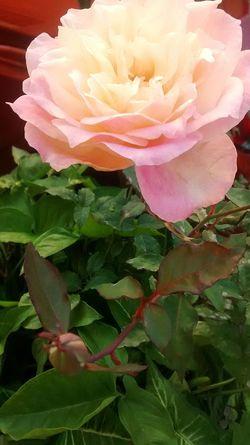 A flor