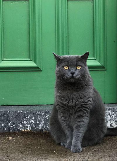 Portrait Of Cat By Green Door