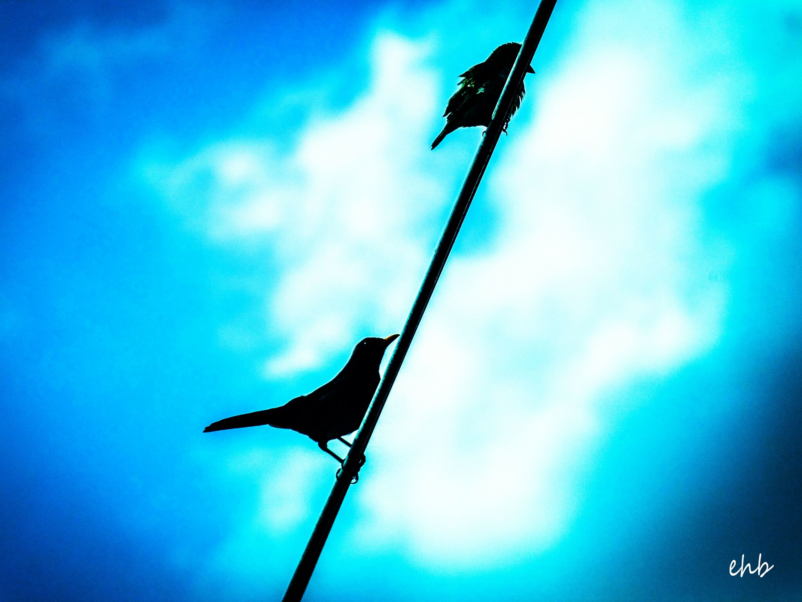 low angle view, blue, sky, animal themes, one animal, cloud, cloud - sky, silhouette, nature, wildlife, outdoors, animals in the wild, no people, day, street light, pole, focus on foreground, lighting equipment, bird, cloudy